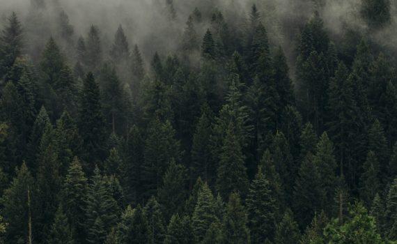 Пять правил, которые помогут не заблудиться в лесу.