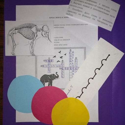 Открытое занятие по учебному предмету «Пластическая анатомия»