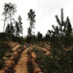 "Акция ""Возрождая лесные культуры"""